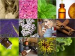 Beyond Aromatics: Aromatherapy Conference